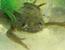 frosch_web